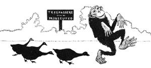 Illustration Jacko from Animal Antics
