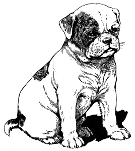 Illustration: John, the Bull-Dog Puppy. Our Dear Dogs Father Tuck's Happy Hour Series Raphael Tuck & Sons, Ltd.: London-Paris-Berlin-New York-Montreal. Printed in the Fine Art Works in Saxony. Publishers to Their Majesties The King & Queen, & Her Majesty Queen Alexandra. Ca 1910.