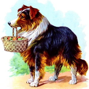Illustration: Collie. Our Dear Dogs. Father Tuck's Happy Hour Series. Raphael Tuck & Sons, Ltd.: London-Paris-Berlin-New York-Montreal. Printed in the Fine Art Works in Saxony. Publishers to Their Majesties The King & Queen, & Her Majesty Queen Alexandra. Ca 1910.