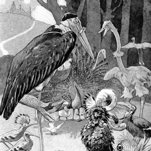 Illustration: Kind of Birdland. The Curious Book of Birds. Written by Abbie Farwell Brown. Illustrations by E. Boyd Smith. Houghton, Mifflin & Company: Boston & New York. 1903.