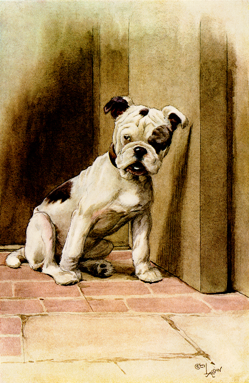 Illustration:  Bulldog Puppy.  OUR FRIEND THE DOG  By Maurice Maeterlinck.  Illustrated by Cecil Alden.  Dodd, Mead & Company: New York. 1913.