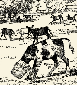 Illustration: Calf Stuck. COWS AND CALVES. Written by Frances Trego Montgomery. Illustrations by Hugo Von Hofsten. Barse & Hopkins Publishers: New York. 1912.