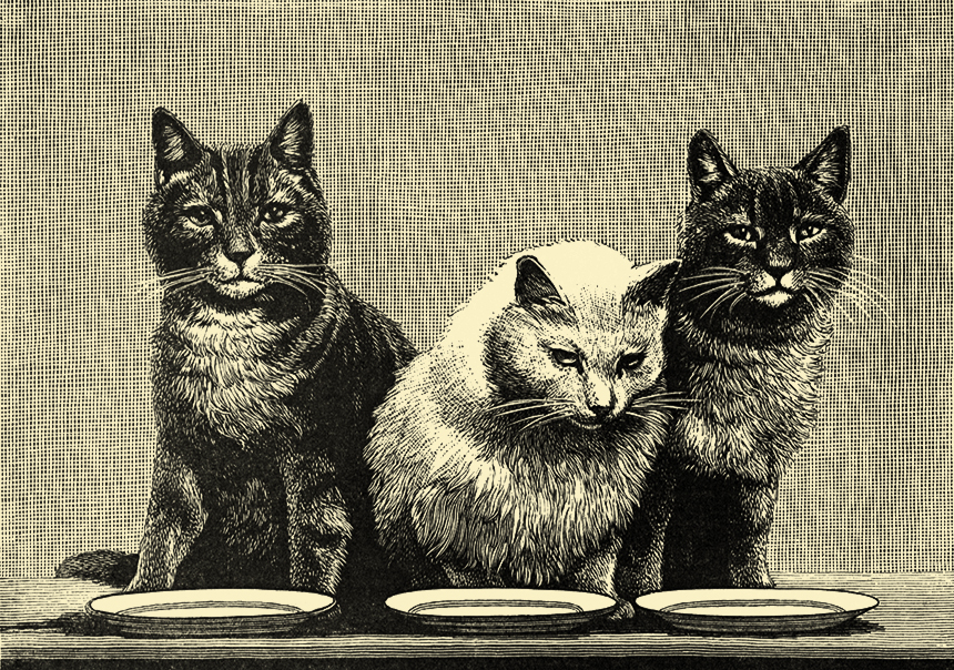 """Illustration:  THE KITTENS  """"We are waiting for the Fish, Cook!""""  Funny Stories About Funny People.  Illustrations by J. G. Francis, J. C. Shepherd, F. J. Merrill, Palmer Cox, George F. Barnes and Others.  National Publishing Company: Philadelphia. Ca 1905."""