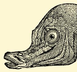 Illustration: The Boarfish. Mary's Little Lamb. Henry Altemus Company: Philadelphia. 1906.