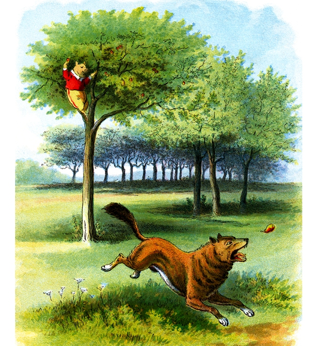 Illustration:  Pig In A Pear Tree.  The Story of The Three Little Pigs.  McLoughlin Bro's: New York. Ca 1900.