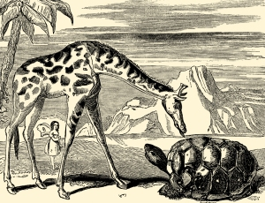 Illustration: THE BLACK TORTOISE AND THE GIRAFFE. Tiny and Her Vanity. McLoughlin Bros.: New York. Ca 1892.