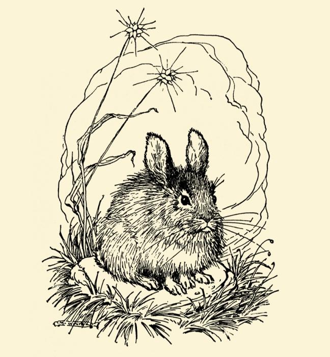 Illustration:  Billy Popgun.  Written and Illustrated by Milo Winter.  Houghton Mifflin Company: Boston & New York. 1912.