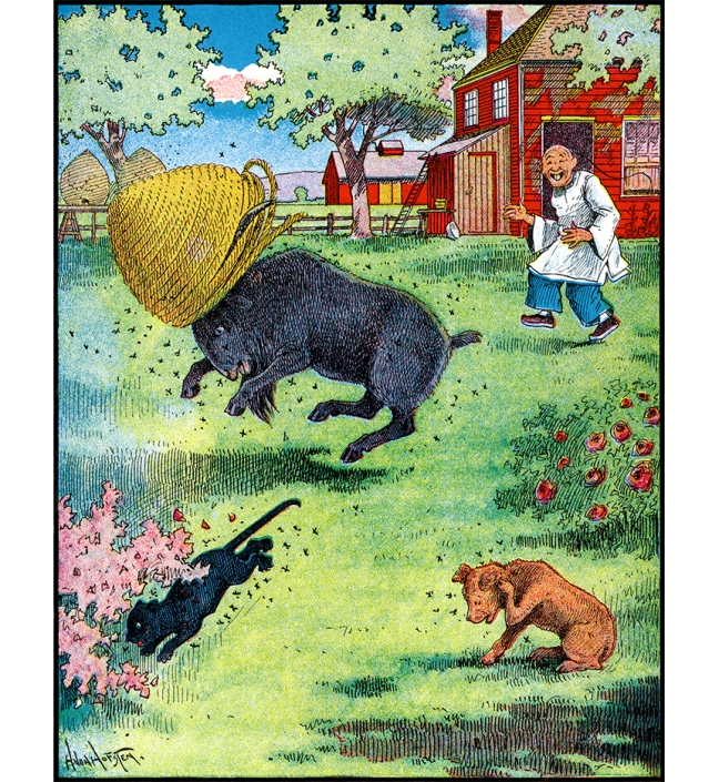 Illustration:  WHAT WAS THE MATTER? HAD HE STUCK HIS NOSE INTO A PIN-CUSHION?  Billy Whiskers, Jr. and His Chums.  By Frances Trego Montgomery.  Illustrated by Hugo von Hofsten.  The Saalfield, Publishing Company: Chicago, Akron, Ohio & New York. 1907.